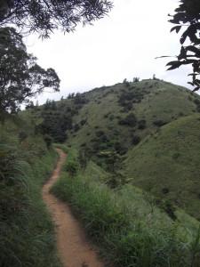 Lantau Peak Track