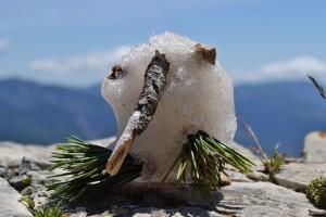 Snow Kiwi