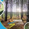 Final Reminder: Oceania2017 Entries Close Friday 24th March 2017