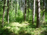 WOC Report #1: Marshes, mosquitoes and meanderings in Estonia